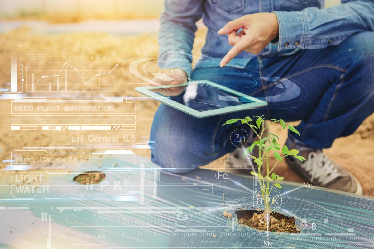 Agricoltura di precisione e Intelligenza Artificiale: niente sarà più come prima