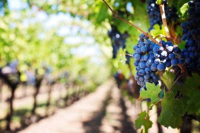 La rubrica 'Innovazione' della rivista 'I Grandi Vini' elegge V.In.Te.S. miglior progetto di innovazione vitivinicola in Campania