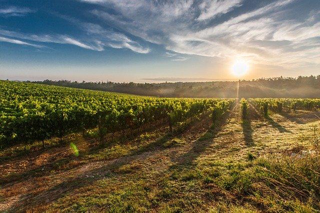 Misure anti-Coronavirus per salvaguardare le attività vitivinicole