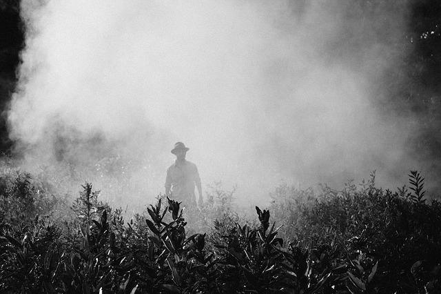 Agricoltura di precisione e sostenibilità: il cambiamento climatico che aumenta le spese sui pesticidi