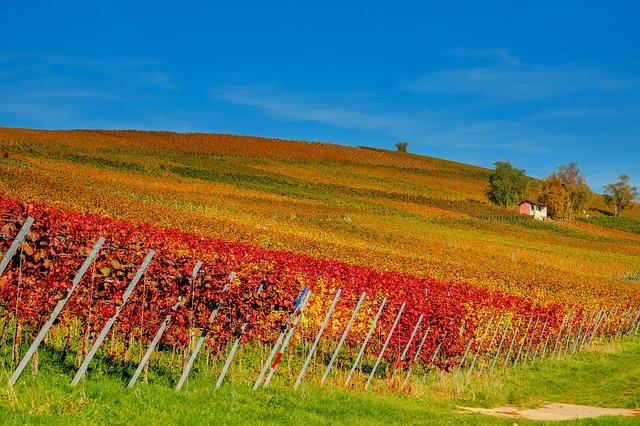 viticoltura di precisione